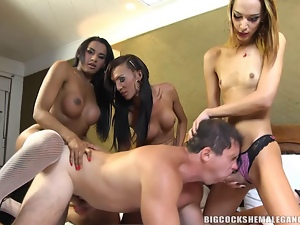 Ass, Asshole, Dick, Fucking, Gangbang, Shemales, Tgirl, Tranny, Transsexual